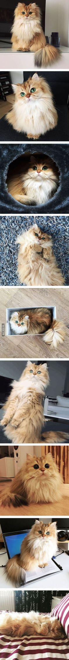 This Is Smoothie, The World's Most Photogenic Cat <~~and better looking than I'll ever be
