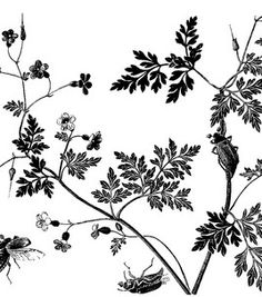 LaBlanche Silicone Stamp-Bugs in a Bush Silicon Mix, Stencils, Black Leaves, Black N White, Border Design, Pattern Art, Watercolor Flowers, Bugs, Sewing Crafts