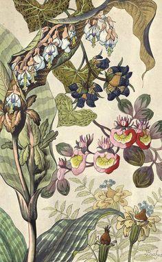 Японский fantasy цветы этих красочных изображений с цветочным орнаментом в стиле ар-деко