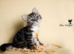 Kitten Njashka by ~KittenBlackUA on deviantART