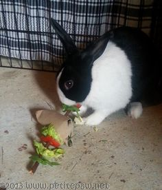 How to make your own rabbit toys
