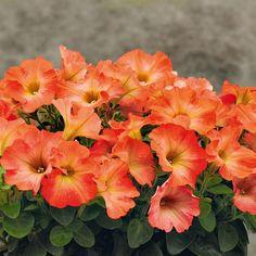 Les 123 meilleures images du tableau Fleurs de jardin Printemps/été ...