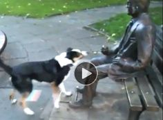 THIS IS THE EPITOME OF DOGGED DETERMINATION! | This pooch is totally convinced a statue of a man is actually alive and has to play fetch with him. Must play! The border collie barks and cries and bounds about with such enthusiasm, I was half expecting that statue to give up and toss the stick. It's quite funny and shows how it's darn hard to dampen the passion of a canine who desires to do something. Now! Enjoy.