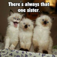Details about Funny Cat refrigerator magnet 3 x 3 - Funny Animal Quotes - - The post Details about Funny Cat refrigerator magnet 3 x 3 appeared first on Gag Dad. Funny Animal Jokes, Funny Dog Memes, Cute Funny Animals, Funny Sister Memes, Cute Cat Memes, Funny Cats And Dogs, Funny Sarcasm, Funny Kittens, Pet Memes
