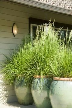 Plant lemon grass in big pots for the patio. It repels mosquitoes and it grows tall. Plant lemon grass in big pots for the patio. It repels mosquitoes and it grows tall. Diy Garden, Dream Garden, Lawn And Garden, Garden Plants, Backyard Plants, Backyard Ideas, Backyard Patio, Outdoor Plants, Potted Plants Patio