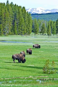 Tips for hiking and camping at Yellowstone National Park http://ordinarytraveler.com/tipsarticles/tips-hiking-camping-yellowstone-national-park