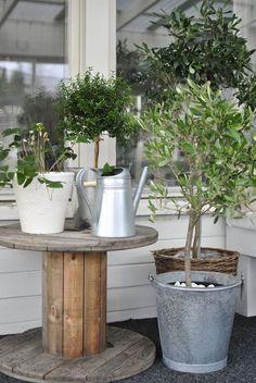 hannashantverk.blogspot.se uterum kabeltrumma olivträd oxanis myrten
