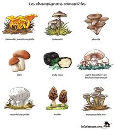Discover recipes, home ideas, style inspiration and other ideas to try. Mushroom Art, Mushroom Fungi, Edible Mushrooms, Stuffed Mushrooms, Permaculture, Crystal Drawing, Herb Art, Episode Interactive Backgrounds, Herbs For Health