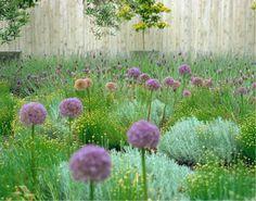 Garden Ideas, Landscaping Ideas, Drought Tolerant, Full sun plants, Lavender, Lavandula Stoechas, Spanish Lavender, French Lavender, Santolina, Allium Purple Sensation, Artemisia