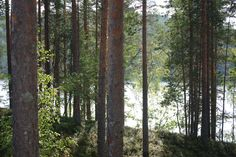 Forest and lake in Finland