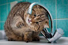 Hábitos de higiene para los gatos - Miau, el blog de Maskokotas  #gatos #mascotas #animales