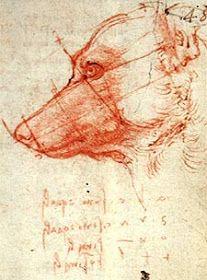 Leonardo Da Vinci Renaissance, Moose Art, Animals, Voice Actor, Renaissance, Exhibitions, Museums, Drawings, Dogs
