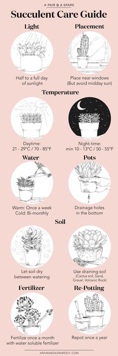 An Illustrated Guide to Caring for Your Succulents