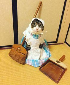 ゴミゼロの日✨ May 30 is the day of Zero Waste in Japan. Cute Funny Animals, Funny Animal Pictures, Cute Baby Animals, Cute Kittens, Cats And Kittens, Funny Cat Memes, Funny Cats, I Love Cats, Crazy Cats