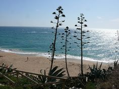 The beach, Caños de Meca, Spain  #Beach #Cádiz   www.restaurantecastillejos.es