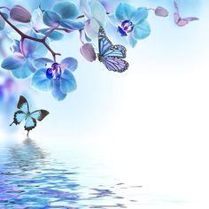 Fototapeta Kwiatów tle z tropikalnych storczyków i motyl 365 dni na zwrot ✓ Miliony wzorów ✓ 100% ekologiczny druk ✓ Profesjonalna obsługa i doradztwo ✓ Skonfiguruj online!