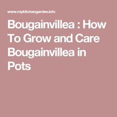 Bougainvillea : How To Grow and Care Bougainvillea in Pots