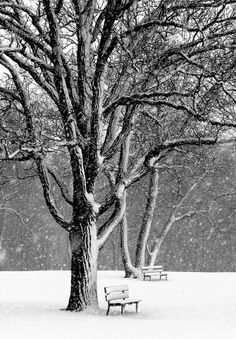 Beautiful<3Hope there to be people sitting on those two benches in waiting...come Spring<3