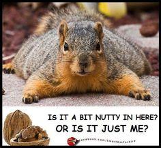a bit nutty