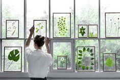 Cadres transparents posées sur une fenêtre - Moebe