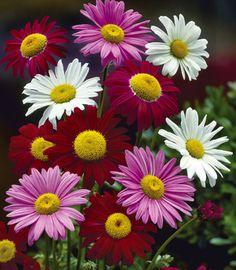 73 Best Full Sun Flowers Images Perennials Flowers
