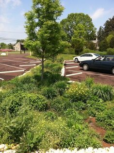 Rain garden between parking bays in the new visitor lot. Stormwater from the rain garden empties into swales leading to wetland pond - Black Rock Sanctuary | Landscape Performance Series