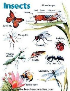 insects english large chart kindergarten art lessons ice insect diagram ice maker wire diagram