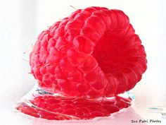 Fruit Photography Food Photography Rasberry by SuePetriPhotos, $30.00