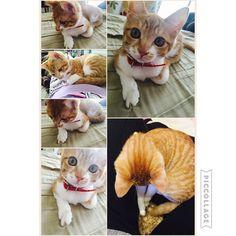 今日のさらんちゃん #猫#可愛すぎかよ#サランジーナ #사랑해요mikachinkoseyo2016/02/17 22:16:00