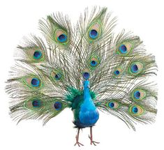 Exquisite Fan Tail Peacock Feathers Wedding Christmas Tree Topper Decoration Ornament. $32.95, via Etsy.