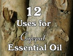 12 Uses for Cajeput Essential Oil. This essential oil has many health benefits ranging from pain relief, digestive relief to use as an insect repellent. Essential Oils For Asthma, Calming Essential Oils, Essential Oil Uses, Natural Asthma Remedies, Ayurvedic Remedies, Yl Oils, Natural Oils, Essentials, Insect Repellent
