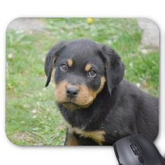 Rottweiler Puppy Mouse Pad - dog puppy dogs doggy pup hound love pet best friend