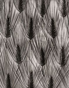 What To Search For Right Before You Purchase Your Higher Than Floor Pool Karl Blossfeldt Fine Art Photography Karl Blossfeldt, Pattern Photography, Fine Art Photography, Nature Photography, Patterns In Nature, Textures Patterns, Motifs Textiles, Elements Of Art, Pattern Art
