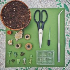 Mini succulent arrangements in unconventional pots. Learn how to make these mini succulent arrangements by using succulent cuttings and common household items. Succulent Cuttings, Propagating Succulents, Succulent Gardening, Succulent Pots, Cacti And Succulents, Planting Succulents, Cactus Plants, Mini Cactus Garden, Natural Treatment For Anxiety