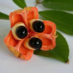 Exotische Früchte - Wenn Sie denken, Sie haben schon alles an Obst- und…