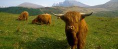 IITours | Skotsko