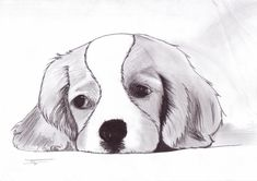 ideas dogs art drawing for kids Pencil Art Drawings, Art Drawings Sketches, Easy Drawings, Easy Animal Drawings, Dog Sketch Easy, Dibujos Cute, Animal Sketches, Dog Art, Cute Art