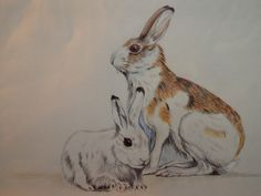 hare colour pencil on paper paint by myself ago 2012 #paola consani