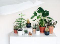 Kotilo - Divaaniblogit Greenery, Cactus, Spaces, Prickly Pear Cactus, Cactus Plants