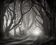 The Dark Hedges in County Antrim, Northern Ireland, by Gary McParland on Flickr.