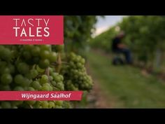 Wijngaard Saalhof - http://bookcheaptravels.com/wijngaard-saalhof/ - In the northwestern part of the Netherlands, in the village of Wognum, is where you find Wijngaard (Vineyard) Saalhof.The history of the farm that was locate... - saalhof, tales, tasty, wine, winemaker, wineries, yt:cc=on