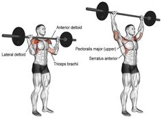 The barbell overhead press targets your anterior deltoid. Your lateral deltoid, upper pectoralis major, triceps brachii, and trapezius act as synergists. Fitness Workouts, Weight Training Workouts, Gym Workout Tips, Workout Regimen, Fun Workouts, Training Exercises, Body Workouts, Best Shoulder Workout, Shoulder Exercises