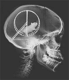 Skull rat minded