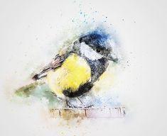 Bird, Color Feathers, Chickadee Art