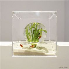The Waterscape Aquarium Exhibit held at the Misawa Design Institute features a series of small architectural and artsy fish tanks designed by Hakura Misawa