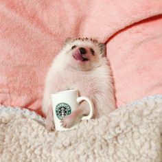 How about a warm beverage for you too? Baby Animals Super Cute, Cute Little Animals, Cute Funny Animals, Cute Cats, Cute Hamsters, Baby Animals Pictures, Cute Animal Pictures, Animals And Pets, Farm Animals