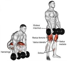 A compound push exercise. Muscles worked: Gluteus Maximus Erector Spinae Hamstrings Adductor Magnus Quadriceps and Soleus. Fitness Workouts, Gym Workout Tips, Dumbbell Workout, At Home Workouts, Fitness Motivation, Fitness Goals, Lifting Motivation, Workout Men, Fitness Quotes
