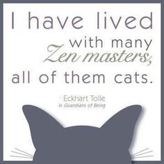 I have lived with many zen masters, all of them cats. --Eckhardt Tolle