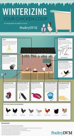 Chicken Coop - PoultryDVM - Winterizing your Chicken Coop Infographic Building a chicken coop does not have to be tricky nor does it have to set you back a ton of scratch. Chicken Barn, Chicken Coup, Chicken Runs, Chicken Coop Winter, Simple Chicken Coop, Inside Chicken Coop, Urban Chicken Coop, Small Chicken Coops, Chicken Life