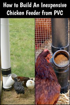 Learn how to build this easy-fill, no-spill, and light on the pocket chicken feeder made from PVC. Pvc Chicken Waterer, Cute Chicken Coops, Chicken Feeders, Chicken Coop Plans, Chicken Coup, Chicken Coop Designs, Building A Chicken Coop, Chicken Life, Chicken Humor